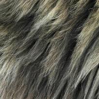Dog Fur Textures
