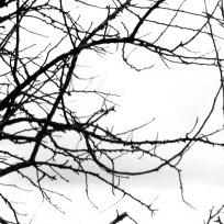 Tree Branch Textures